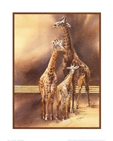 Family of Giraffes Framed Print