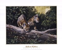 Bobcat Kittens Framed Print