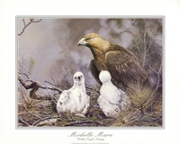 Golden Eagle Nesting Fine Art Print