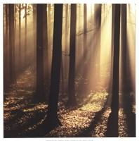 Sunlight and Trees II Fine Art Print