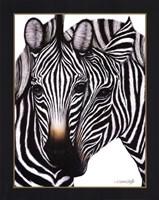 Zebras Framed Print