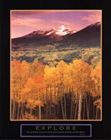 Explore Aspen Grove Framed Print