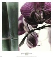 Bamboo I (Flower I) Framed Print