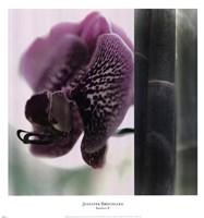 Bamboo II (Flower II) Fine Art Print
