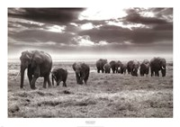 Amboseli Elephants Framed Print