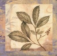 Leaf Botanicals II - petite Framed Print