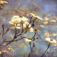 Dogwood II - mini Fine Art Print