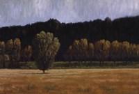 Cottonwood Country I Fine Art Print