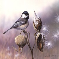 Chickadee and Milkweed Fine Art Print