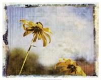 Blackeyed Susans II Fine Art Print