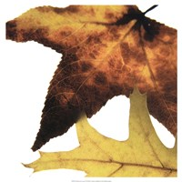 Inflorescent Leaves II Fine Art Print