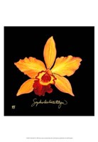 Vivid Orchid VI Fine Art Print