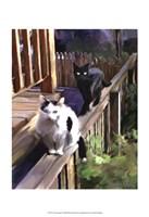 Cats Fencing Fine Art Print