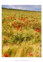Poppies in Field I Fine Art Print