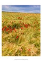 Poppies in Field II Fine Art Print
