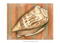 Shell on Stripes III - light Fine Art Print