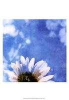 Daisies III Fine Art Print