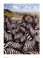 Zebra Gathering Fine Art Print