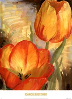 Summer Tulips II Fine Art Print