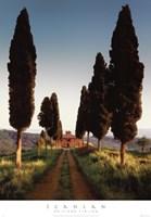 Cypress Lane Fine Art Print