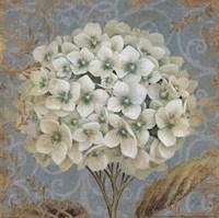 Hydrangea Square II Fine Art Print