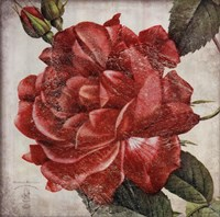 Rose Flower Fine Art Print