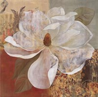 Magnolia Morning II Framed Print