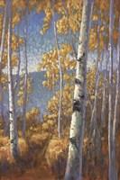 Aspen Forest II Framed Print