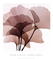 Ginko Leaves II Fine Art Print