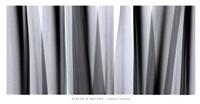 Yucca Leaves Framed Print