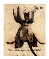 Fig. 8a Fine Art Print
