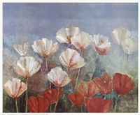 Blushing Poppies Fine Art Print