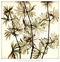Wild Geranium Fine Art Print