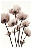 Windflowers Fine Art Print