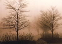Foggy Walk Fine Art Print