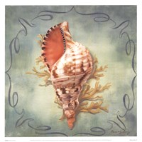 Seashells I Fine Art Print