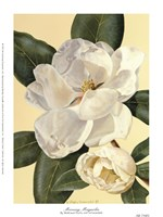 Morning Magnolia Fine Art Print