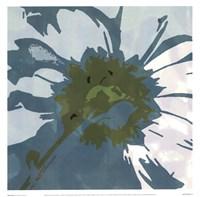 Daisy Square II Fine Art Print