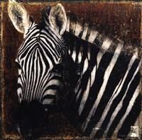 Portrait de Zebre Fine Art Print