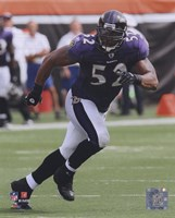 Ray Lewis 2010 Action On The Field Fine Art Print