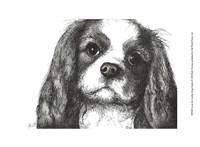 Louie the Cavalier King Charles Fine Art Print