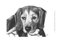 Lindy the Beagle Fine Art Print
