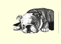 Gracie the Bulldog Fine Art Print