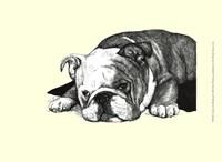 Gracie the Bulldog Fine Art Print