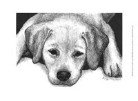 Kailie the Yellow Lab Fine Art Print