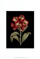 Crimson Flowers on Black III Fine Art Print