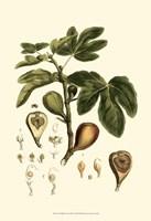 Small Miller's Bounty III (P) Fine Art Print