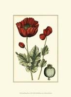 Small Poppy Blooms I (P) Fine Art Print