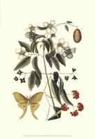 Sm Catesby Butterfly&Botan. III (P) Fine Art Print