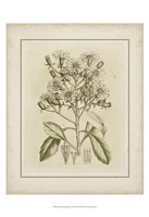 Small Tinted Botanical I (P) Fine Art Print